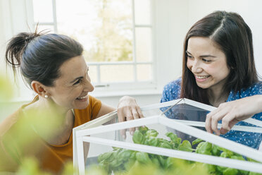 Two women caring for herbs in glass box - JOSF01303