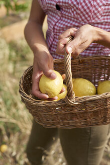 Hands of woman holding basket with lemons, close-up - PACF00054