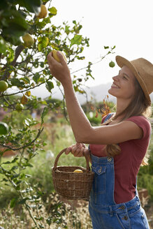 Young woman picking lemons - PACF00057