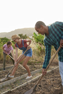 Three friends preparing a vegetable patch - PACF00072