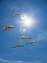 Flying herring gulls - AMF05441