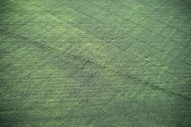 USA, Irrigated farming in Eastern Colorado - BCDF00302