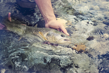 Slovenia, man fly fishing in Soca river catching a fish - BMAF00321