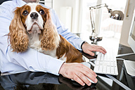 Businessman sitting at desk working with dog on his lap - PUF00669