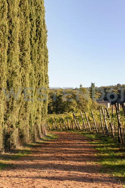 Italy, Tuscany, Province of Siena, field and cypresses - CSTF01352