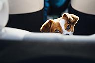 Watching dog - MJF02155