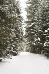 Snow-covered forest track - HAPF02090