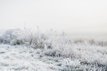 Germany, frost-covered landscape - MJF02163