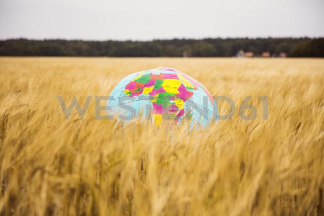 Globe in grain field - MOEF00073
