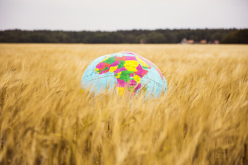 Globe in grain field - MOEF00073