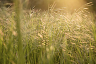 Grass on field in sunlight - SIPF01677