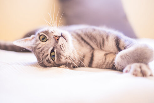 Tabby cat relaxing on bed - SIPF01686