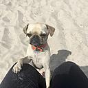Dog wants food - LMF00733