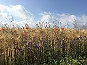 Fields in summer - LMF00739