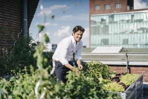 Businessman cultivating plants in his urban rooftop garden - KNSF02722