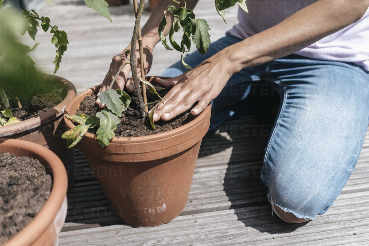 Woman caring for plants on balcony - JOSF01555 - Joseffson/Westend61