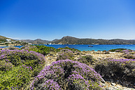 Greece, Amorgos, blooming brushes at the coast - THAF02035