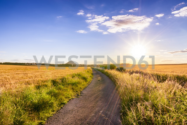UK, Scotland, East Lothian, dirt track in between fields of barley at sunset - SMAF00833