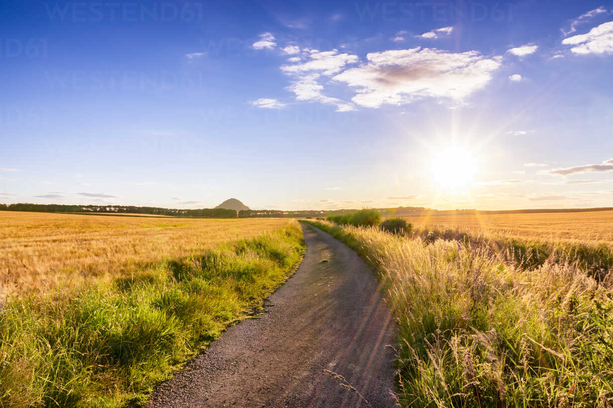 UK, Scotland, East Lothian, dirt track in between fields of barley at sunset - SMAF00833 - Scott Masterton/Westend61