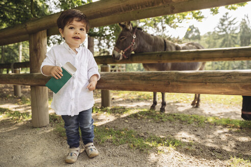 Smiling toddler holding up animal food for donkey in wild park - MFF03957