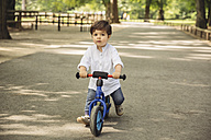 Toddler using a balance bicycle in wild park - MFF03960