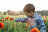 Boy in a poppy field in spring - JRFF01440