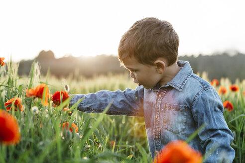 Boy in a poppy field in spring - JRFF01440