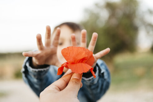 Father's hand giving a poppy to his son - JRFF01443