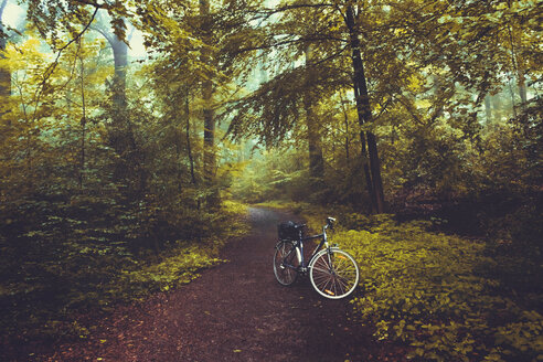 Bicycle on forest path - DWIF00871