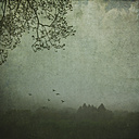Fog above forest landscape, textured photography - DWIF00874