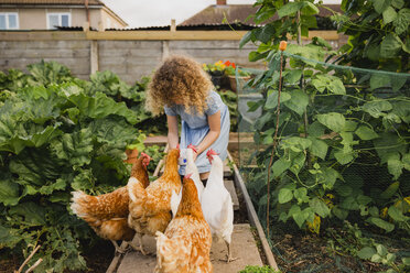 Little girl feeding chickens in allotment - NMSF00156