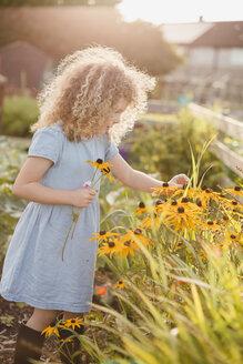 Little girl picking flowers in the garden - NMSF00162