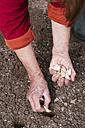 Close-up of woman planting garlic - HAWF00982