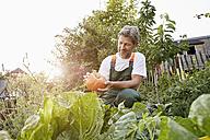 Mature man standing in his garden wearing apron - PDF01394