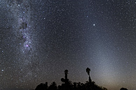 Namibia, Region Khomas, near Uhlenhorst, Astrophoto, Band of Milky Way and parallel Zodiacal Light with palm trees in foreground during twilight - THGF00001
