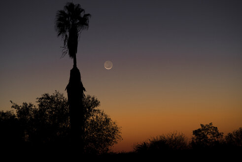 Namibia, Region Khomas, near Uhlenhorst, Astrophoto, setting New Moon crescent with palm trees in foreground - THGF00010