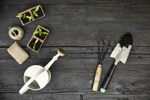Gardening tools and seedlings on dark wood - PDF01401