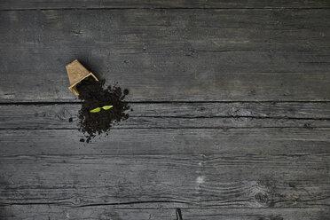 Seedlings on dark wood - PDF01404