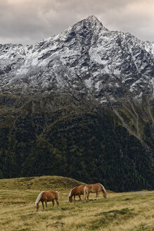Austria, Tyrol, Oetztal, Soelden, horses on alpine meadow - GFF01032