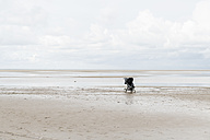 Netherlands, Ouddorp, buggy standing on the beach in autumn - CHPF00437