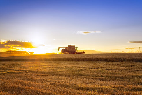UK, Scotland, East Lothian, combine harvester in field of wheat at sunset - SMAF00837