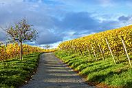 Germany, Hesse, Hessische Bergstrasse between Bensheim and Heppenheim in autumn - PUF00775