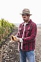 Farmer on field examining corn cob - UUF11905