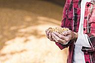 Grains of maize in hands - UUF11932