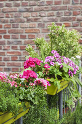 Flower boxes with blossoming summer flowers and rosmary - GWF05287
