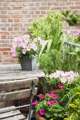 Potted blossoming summer flowers and potted rosmary on balcony - GWF05290