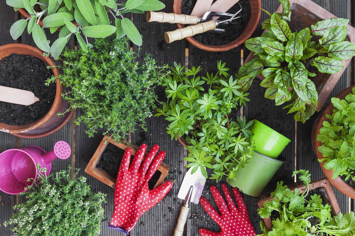 Planting culinary herbs on balcony - GWF05293 - Gaby Wojciech/Westend61