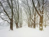 Germany, Cologne, winter at Decksteiner Weiher - GWF05298