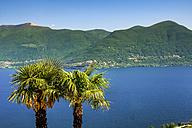 Switzerland, Ticino, Lago Maggiore, palms - PUF00820