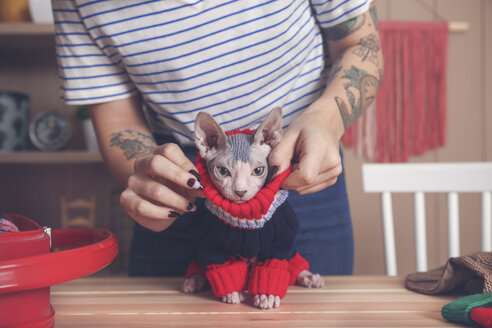 Woman putting pullover on her Sphynx cat at home - RTBF01057